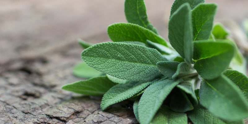 health benefits sage